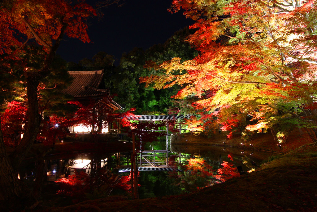 Kodaiji Red Leaf Lightup 2010 (3)