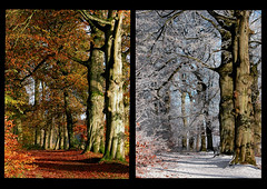 Seasonal change (Jan Visser Renkum) Tags: autumn winter forest herfst bos renkum oostereng
