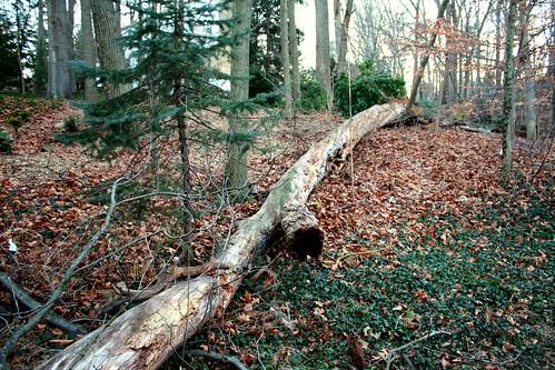 Future Firewood