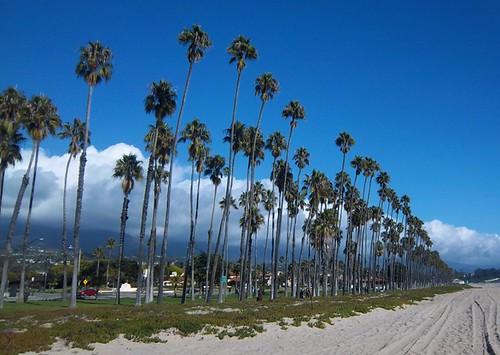 Cabrillo Blvd Palms