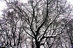Takkenbos (renerotterdam) Tags: schnee trees snow bomen rotterdam sneeuw rotterdamzuid bumen vleugelnootbomen renerotterdam vreewijk dalweg