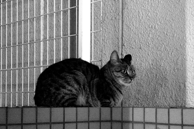Today's Cat@2010-12-20