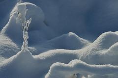 Snow structures (Jan Visser Renkum) Tags: winter snow sneeuw
