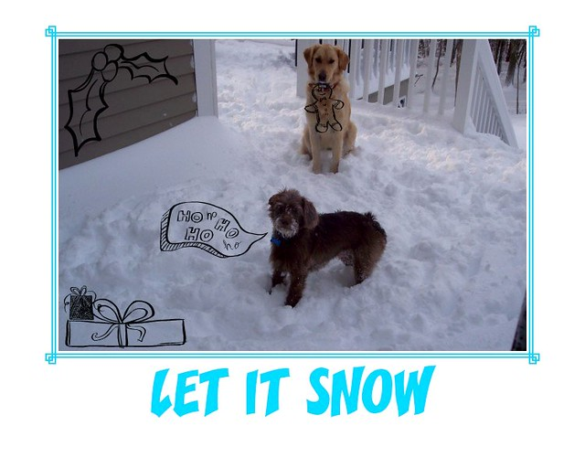 Cocoa & Sam & Snow