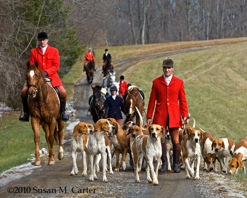 Old Dominion hounds, foxhunting, horses