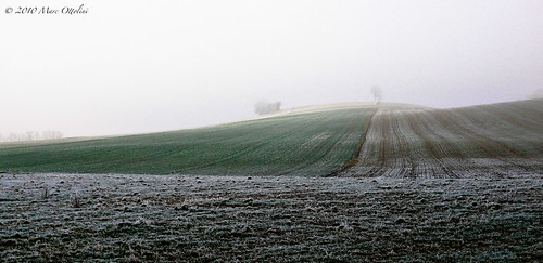 Frozen fields II