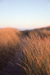 The Sand Dunes of Newport (Great Beyond) Tags: morning travel slr film tourism oregon analog sunrise 35mm canon eos dawn highway scenery view image kodak dunes scenic slide roadtrip tourist ishootfilm slidefilm hwy 101 newport 35mmfilm views k2 americana openroad oregoncoast interstate kodachrome kr roadside eastman slides sanddune 3000v highway101 kodachrome64 k14 newportoregon offtheinterstate latent ushighway101 yaquinabay eastmankodak roadgeek canoneosrebelk2 filmisnotdead canonrebelk2 kr64 iso64 kodakkodachrome64 latentimage openroads ontheopenroad tamronaf28200mm dwaynesphoto tamron28200mmf3856ldasphericalifsuper