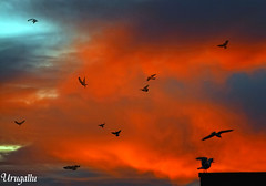 Primer amanecer del 2011 (Urugallu) Tags: espaa canon libertad spain rojo flickr gijn asturias colores amanecer nubes gaviotas vuelo comienzo asturies xixn 2011 50d nuevoao principadodeasturias nuevodia alalba urugallu flickrsportal ao2011
