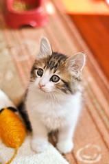 Happy 2011 (L e t i) Tags: cat happy chat little matisse gatto micio gattino litty 2011