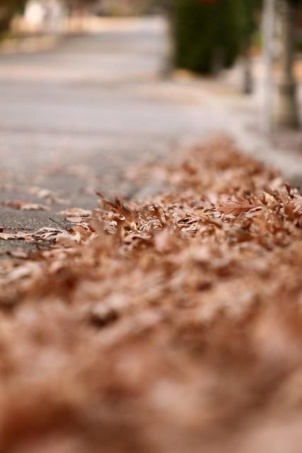 gutter of leaves