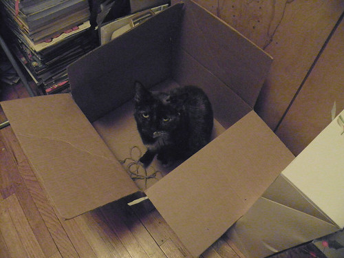 Boxed Moni