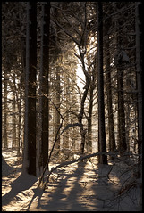 Winterlicht / Winter Light (Ingo Tews) Tags: wood schnee trees winter light shadow sun snow tree forest germany deutschland lights licht shadows sonne wald bume schatten baum lightbeams lichter mecklenburgvorpommern forst lichtstrahlen weitenhagen