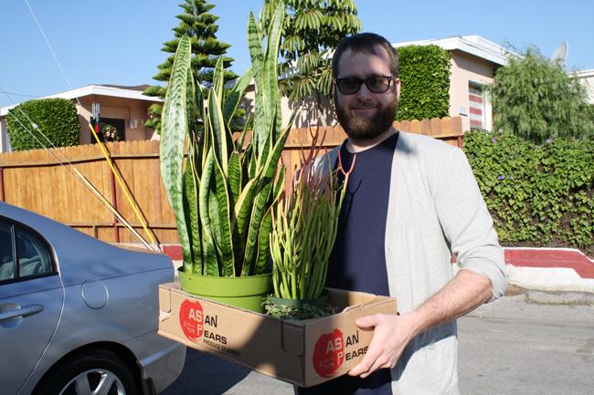 plants & beard