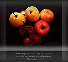 97: Daily Inspirational Bible Verse