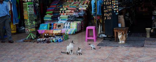 Kattefamilien