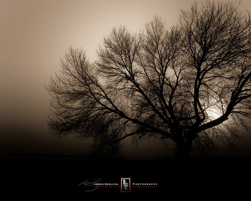 2011 Our Daily Challenge 9/365 - Tree / Loren Zemlicka