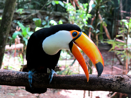 Puerto De Iguazu Toucans And An Animal Rehabilitation In