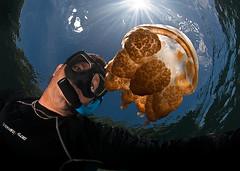 _DSC4626 lrws (gerb) Tags: selfportrait beautiful topv111 1025fav 510fav wow nice topv555 topv333 perfect jellyfish underwater snorkel topv1111 topv999 fv5 loveit topv777 palau tvp
