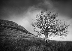 I fought the Law... (Semi-detached) Tags: tree north berwick law landscape grass lothian black white natural scotland scottish clouds semidetached nikon d300 sigma 1020mm lee nd 09