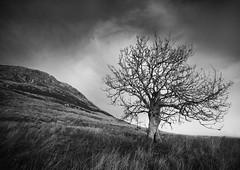 I fought the Law... (Semi-detached) Tags: tree north berwick law landscape grass lothian black white natural scotland scottish clouds semidetached nikon d300 sigma 1020mm lee nd 09
