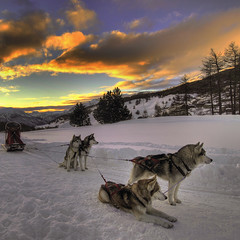 Sleddog@Sestriere  -  Explore (rinogas) Tags: sunset italy snow clouds torino nikon piemonte hdr sleddog sestriere naturepoetry nikkor1224dx saariysqualitypictures rinogas magicunicornverybest