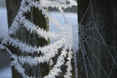 Spinnenweb (Joao.bud) Tags: winter shadow snow cold ice gelo spider web sombra neve eis schee joao spinnen aranha spinnenweb teia budney