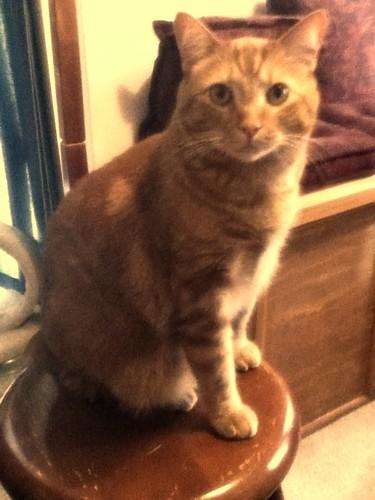 Ptw Leki sitting on stool