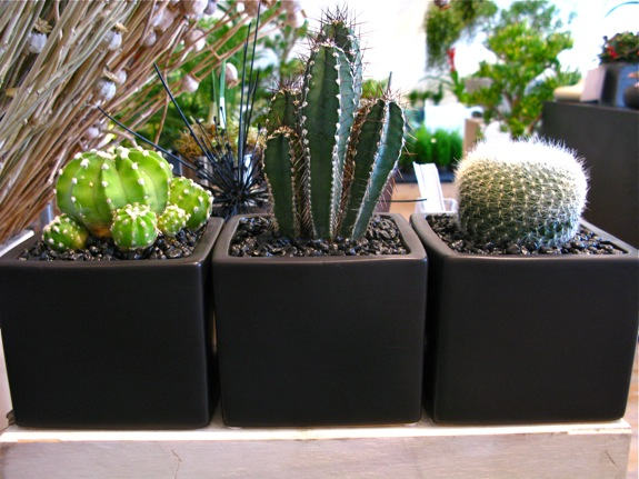 three succulent black cubes