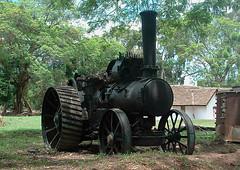 Traction Engine at Shiwa Ngandu 2