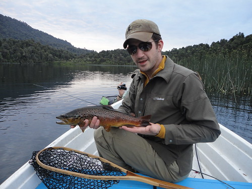 Chilean Lake Brown Trout