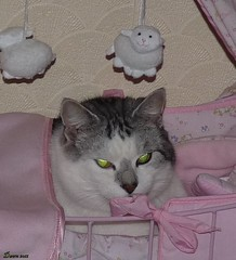 Ahhh The Perfect Bed. Whose A Pretty Boy Then !!!! (Church Mouse 07) Tags: uk pink winter pet cat lumix feline panasonic british sillycat christmasday silvertabby theunforgettablepictures dollscot catnipaddicts dmcfz28 churchmouse07 pipsinbed