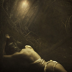 beneath the trees (brookeshaden) Tags: trees forest sticks woods bones brookeshaden texturebylesbrumes