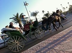 marrakech_170111_0369 (Ben Locke) Tags: