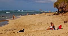 Patience! (jcc55883) Tags: ocean dog beach hawaii nikon waikiki oahu pacificocean fetch diamondheadbeachpark kaalawaibeach nikond40 diamondheadroad