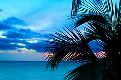 Nothwestern Puerto Rico Sunset (IRainyDays) Tags: blue sunset puertorico palmtree rinconpr