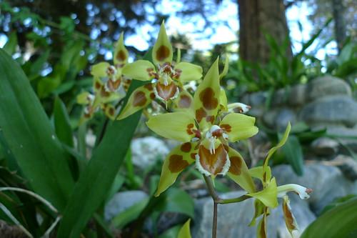 Reynaldo Espinoza Botanical Garden - Loja, Ecuador