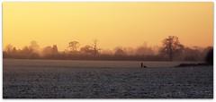 Walking the dog (zweiblumen) Tags: uk winter sunset england shropshire picnik ndfilter tamron28300mm canoneos50d zweiblumen churchaston
