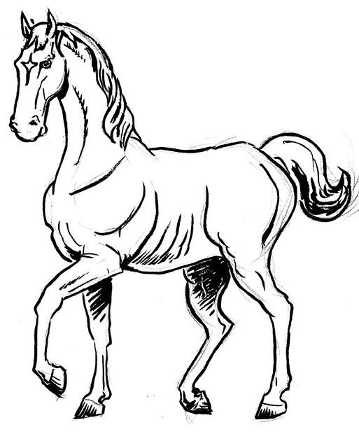 bwhorse