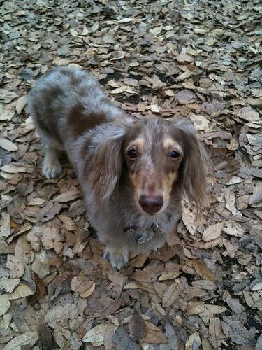 木の葉に同化したワンコに見つめられた。。