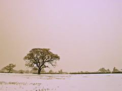 (emskily) Tags: pink winter snow tree field gold december alone