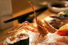 sushi omakase @ sushi uo