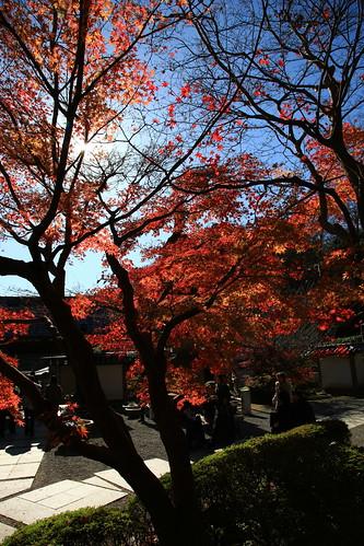 2010年12月4日 覚園寺薬師堂