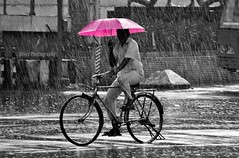 Pink Umbrella (Shivz Photography) Tags: rain chennai pinkumbrella bicycleman