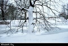 a-Zima 048.. (Elisabeth Gaj) Tags: park trees winter nature wonderful natur zima scandynavia elisabethgaj 100commentgroup