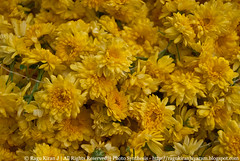 Sevantige 2 (ragukiran_j) Tags: india flower nikon market bangalore madivala nikond40x d40x sevantige ragukiran