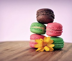 A balanced diet is a cookie in each hand (Violet Kashi) Tags: food colors cookies french dof sweet explore frontpage confectionery macaron