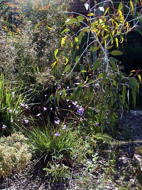 leanne's garden