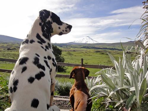 Dogs at Secret Garden Cotopaxi