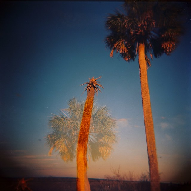 double palm and sky