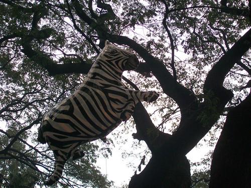 Pouncing Zebra